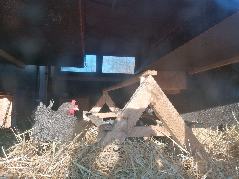 Hühnermobil innen
